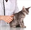 Ветеринарные клиники в Усогорске